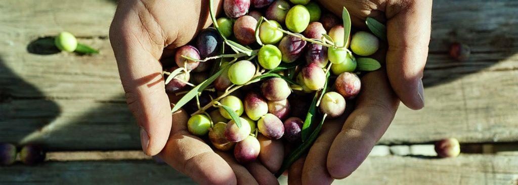 Curiosità sull'olio extravergine d'oliva
